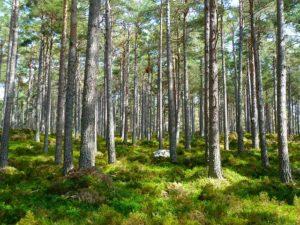 Bäume und Moos